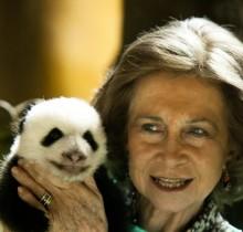 "La reina Sofía estrangulará a un osito panda sino se desimputa a su hija ""de una puta vez"""