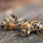 La escasez de abejas para polinizar los voltios aumentará otro 57% el recibo de la luz en España